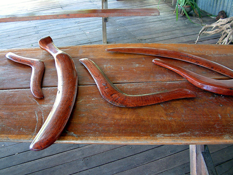 Indigenous boomerangs in the rain forest, Australia. Guillaume Blanchard.